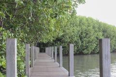 La calzada de madera en el bosque del mangle, el puente de madera en M Imagenes de archivo