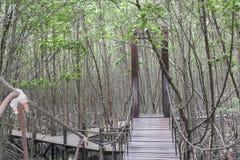 La calzada de madera en el bosque del mangle, el puente de madera en M Foto de archivo