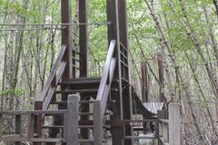 La calzada de madera en el bosque del mangle, el puente de madera en M Fotografía de archivo