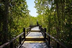 La calzada del puente de madera en bosque del mangle en Pranburi Forest Park, Prachuap Khiri Khan, Tailandia Foto de archivo