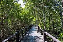 La calzada del puente de madera en bosque del mangle en Pranburi Forest Park, Prachuap Khiri Khan, Tailandia Fotos de archivo libres de regalías