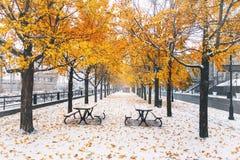 La calzada en la primera nieve con amarillo sale de caer de árboles - Montreal, Quebec, Canadá imagen de archivo