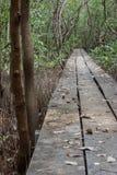 La calzada le gusta el puente de madera en el bosque del mangle Fotografía de archivo