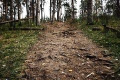 La calzada más forrest del pino, Rusia central Fotografía de archivo