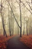 La calzada sola en el otoño abandonó el parque en tiempo de niebla Imagenes de archivo
