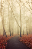 La calzada sola en el otoño abandonó el parque en tiempo de niebla Fotos de archivo