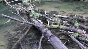 La caméra se déplace de haut en bas et enlève le vieil arbre qui est tombé en rivière banque de vidéos