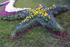 La cama coloreada multi de tulipanes florece en parque en primavera Imagen de archivo