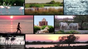 La camargue, Collage stock footage