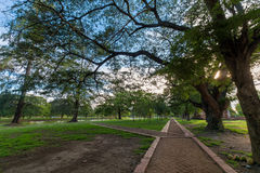 La caminata en el parque Foto de archivo