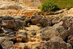 La camomilla si sviluppa in una torrente montano Fotografie Stock
