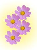 La camomille fleurit décoratif images libres de droits