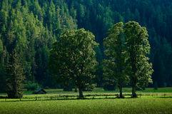 La campagna intorno alla città di Ramsau Dachstein fotografie stock libere da diritti