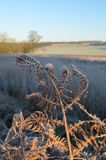La campagne du Sussex en hiver Photo stock