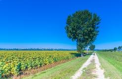 La campagne verte dans Cortona, Toscane Photo stock
