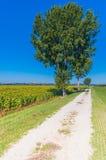 La campagne verte dans Cortona, Toscane Photos stock