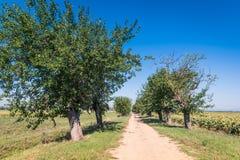 La campagne verte dans Cortona, Toscane Photos libres de droits