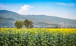 La campagne verte dans Cortona, Toscane Photographie stock