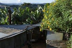 La campagne vietnamienne avec la fleur sauvage de tournesol en jaune le long de rue, Dalat est ville pour le voyage, avec le pays image libre de droits