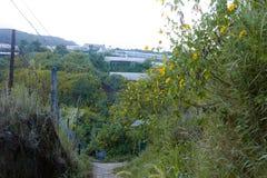 La campagne vietnamienne avec la fleur sauvage de tournesol en jaune le long de rue, Dalat est ville pour le voyage, avec le pays photos stock