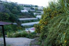 La campagne vietnamienne avec la fleur sauvage de tournesol en jaune le long de rue, Dalat est ville pour le voyage, avec le pays photo libre de droits