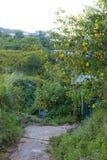 La campagne vietnamienne avec la fleur sauvage de tournesol en jaune le long de rue, Dalat est ville pour le voyage, avec le pays photo stock