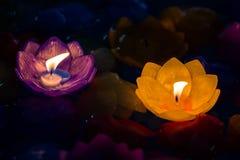 La candela fiorisce variopinto porpora e giallo Fotografia Stock Libera da Diritti
