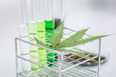 La cannabis droga, l'analisi della cannabis in laboratorio fotografie stock