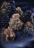 La cannabis germoglia la razza con frutta fresca - marzo medico di Berry Noir Fotografia Stock Libera da Diritti