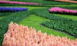 La cantidad grande de los jacintos rosados azules púrpuras imágenes de archivo libres de regalías