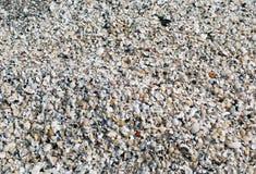 La cantidad grande de pequeñas cáscaras que ponen en la tierra Imagen de archivo