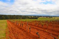 La cantina di Tyrell, Pokolbin, Australia fotografia stock libera da diritti
