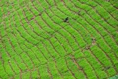 La capa verde de naturaleza en campo del cultivo Fotos de archivo libres de regalías