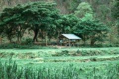 La capanna di legno in risaia ed il riso sistemano in natura, fondo d'annata immagine stock