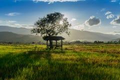 La capanna e l'albero dell'agricoltore sul giardino agricolo in campagna Tailandia e nella luce splende il tramonto Fotografia Stock