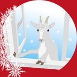 La capra guarda nella finestra - viene l'anno delle pecore Fotografia Stock Libera da Diritti
