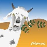 La capra sta tenendo un ramo di un albero dell'argania spinosa con i dadi dell'argania spinosa in suoi denti Il simbolo del Maroc illustrazione di stock