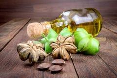 La capsula secca semina la frutta dell'arachide di sacha-Inchi Immagine Stock