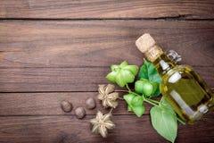 La capsule sèche sème le fruit de l'arachide de sacha-Inchi Photo stock