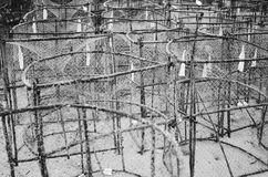 La captura de la trampa de los pescados de cesta critica despiadadamente, los pescados de las langostas en el océano, foco select Imágenes de archivo libres de regalías