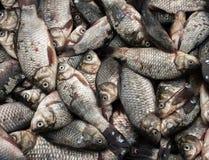 La captura de pequeños pescados Fotos de archivo libres de regalías