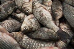 La captura de pequeños pescados Imágenes de archivo libres de regalías