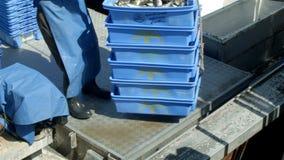La captura de pescados del pescador de la industria de la pesca profesional en el barco en la pesca atraca almacen de metraje de vídeo