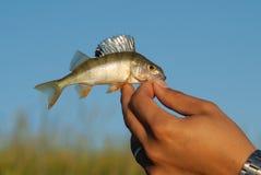 La captura del hombre un pequeño pescado imagenes de archivo