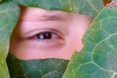 La cara de un ángulo cubierto por las hojas verdes imagen de archivo