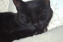 La cara de un gato negro expresivo Fotos de archivo