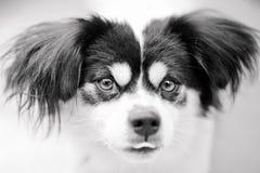 La cara del perro Imagen de archivo libre de regalías