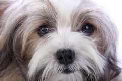 La cara inocente del perrito imagen de archivo libre de regalías