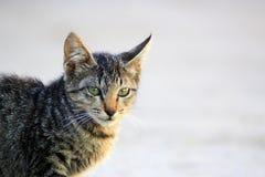La cara linda del gato imagen de archivo