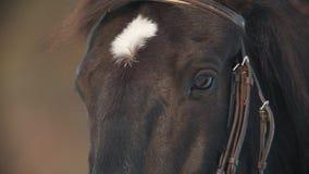 La cara y los ojos del primer marrón del caballo, punto en su frente metrajes